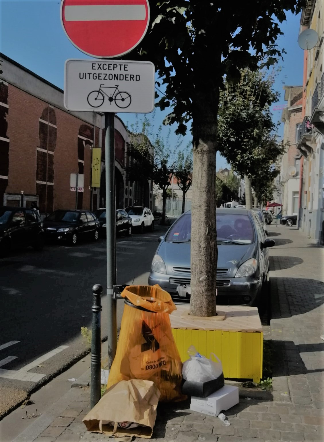 Tree protection in Rue Liverpool in Cureghem